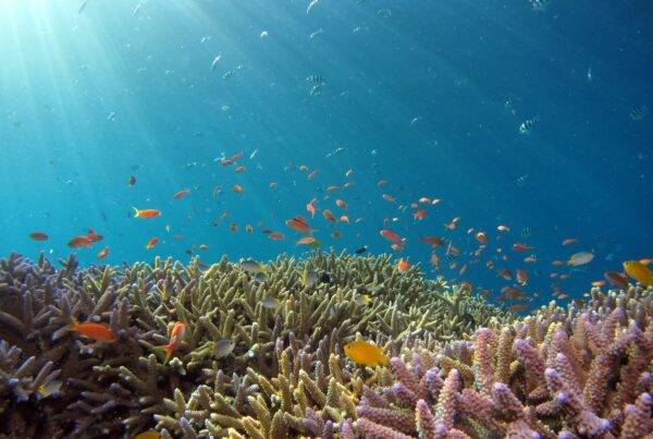 Supporting the Global Fund for Coral Reefs